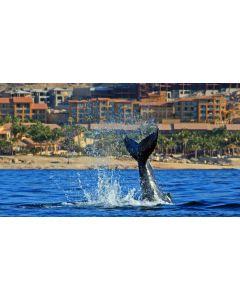 Los Cabos Mexico E 11-09-20